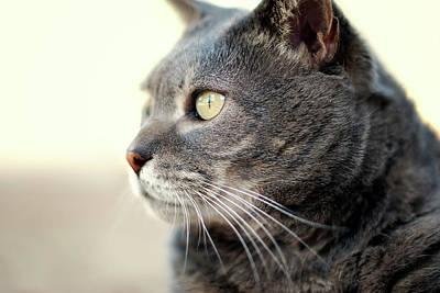 Contemplative Cat Poster