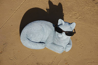 Cool Cat Poster by Aimee L Maher Photography and Art Visit ALMGallerydotcom