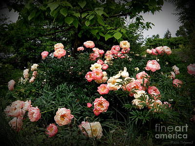 Poster featuring the photograph Coral Peony by Tanya  Searcy