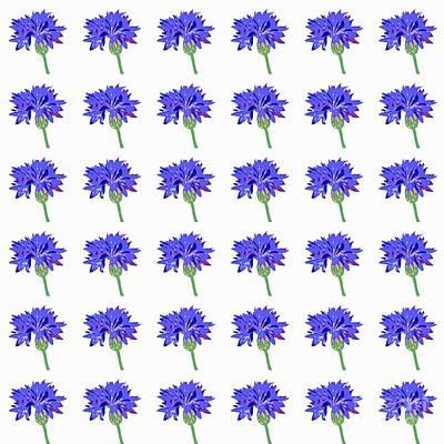 Poster featuring the digital art Cornflowers by Barbara Moignard