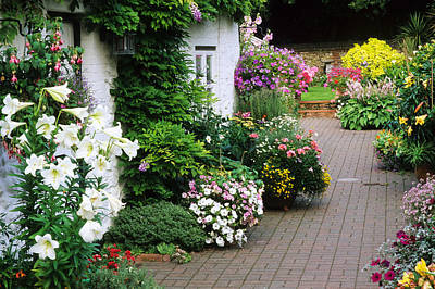 Cottage, Brick Patio Garden, Containers, Lillies Poster