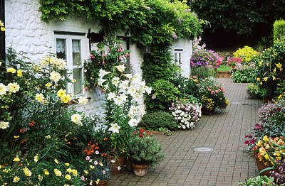 Cottage, Small Brick Garden Patio, Containers Poster