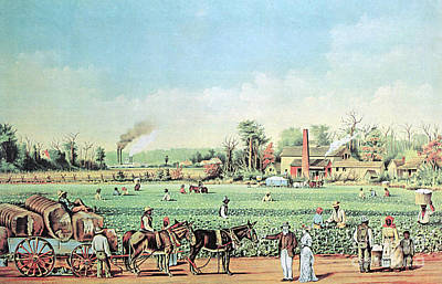 Cotton Plantation On The Mississippi Poster by Photo Researchers