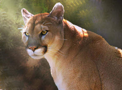 Poster featuring the digital art Cougar by Mary Almond
