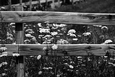 Country Flowers In Black And White Poster