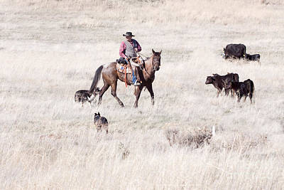 Cowboy Poster by Cindy Singleton