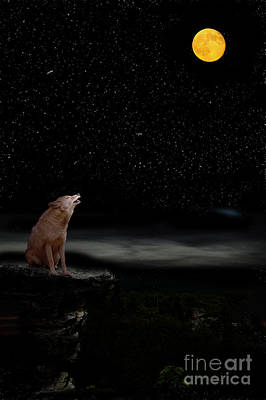 Poster featuring the photograph Coyote Howling At Moon by Dan Friend