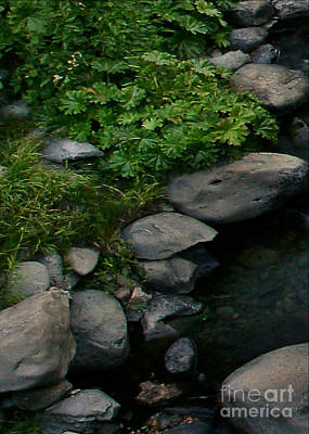 Creek Flow Panel 2 Poster