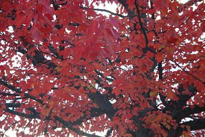 Crimson Leaves Poster