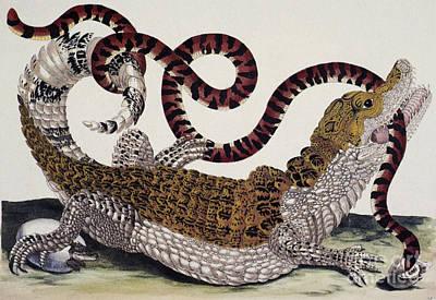 Crocodile & Snake Poster