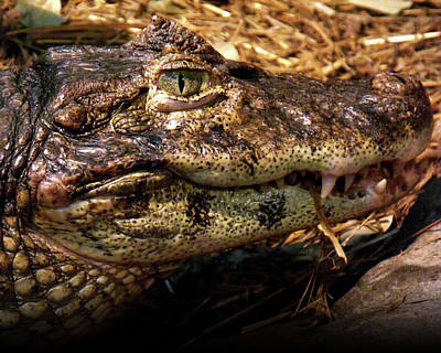 Poster featuring the photograph Crocodile by Jeremy Martinson