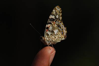 Poster featuring the photograph Curious Butterfly by Tam Ryan