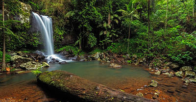 Curtis Falls - Mt Tamborine Poster by Mark Lucey