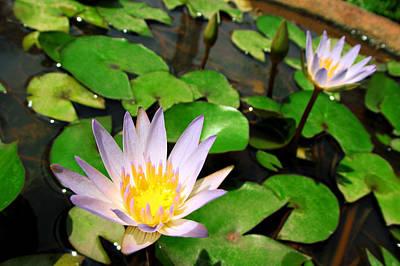 Cute Blue Lotus Poster by Dumindu Shanaka