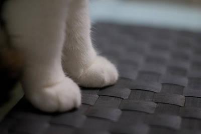 Cute Cat Hand Poster