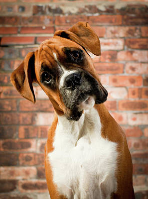 Cute Dog Poster by Danny Beattie Photography