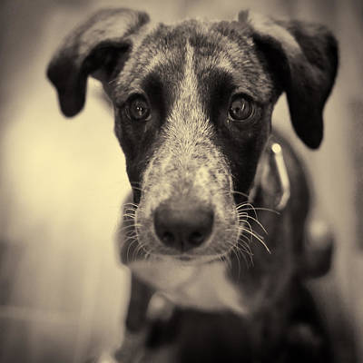 Cute Dog Portrait Poster