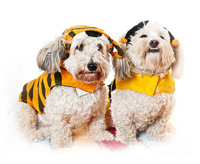 Cute Dogs In Halloween Costumes Poster