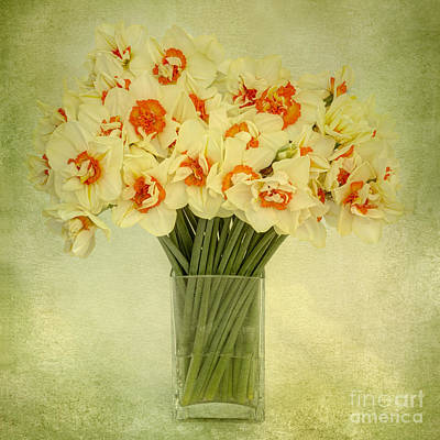 Daffodils In A Glass Vase Poster by Ann Garrett