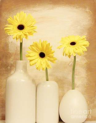 Daisies In A Row Poster by Marsha Heiken