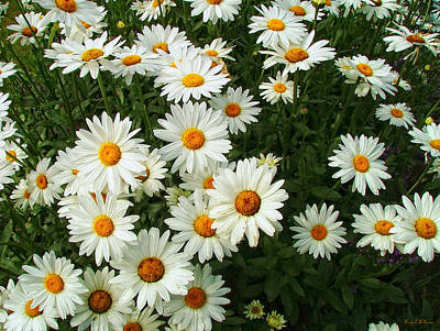 Poster featuring the photograph Daisies by Wendy McKennon