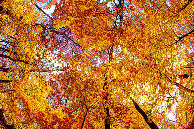 Poster featuring the photograph Dance Of The Autumn Trees by Kimberleigh Ladd