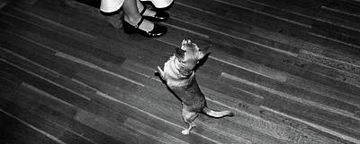 Poster featuring the photograph Dancing Dog  by Atom Crawford