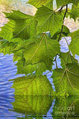 Dangling Leaves Poster
