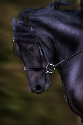 Dark Bay Horse Head Poster by Ethiriel  Photography