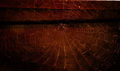 Poster featuring the photograph Dark Web by Robin Dickinson