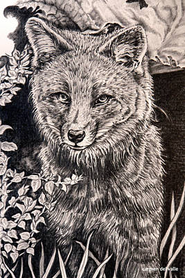 Darwin's Fox Close Up Poster by Carmen Del Valle