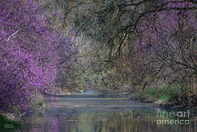 Davis Arboretum Creek Poster