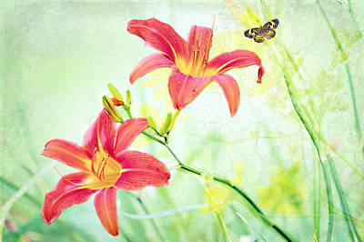Day Lily Delight Poster by Bonnie Barry