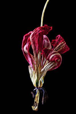 Dead Dried Tulip Poster