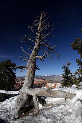 Poster featuring the photograph Dead Tree Over Bryce Canyon by Karen Lee Ensley