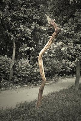 Dead Tree Poster by Sumit Mehndiratta