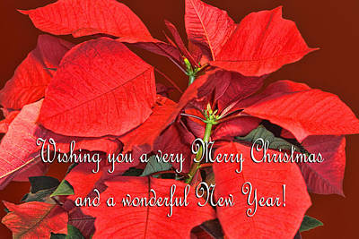 Deep Red Poinsettia Christmas Card Poster