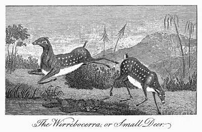 Deer, 1796 Poster by Granger