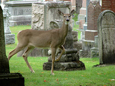Deer Among The Headstones Poster by Bruce Ritchie