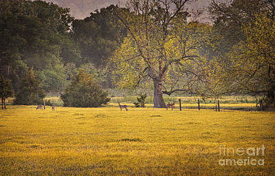 Poster featuring the photograph Deer In Spring Meadow by Cheryl Davis