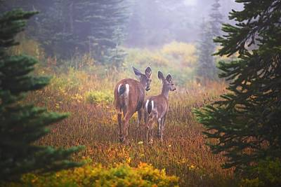 Deer In The Fog In Paradise Park In Mt Poster