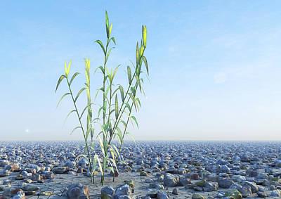 Desert Plant, Artwork Poster