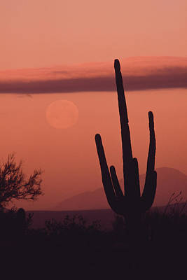 Desert Scene With Full Moon And Saguaro Poster