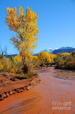 Desert Stream In Fall With Snowy Mountains  Poster by Gary Whitton