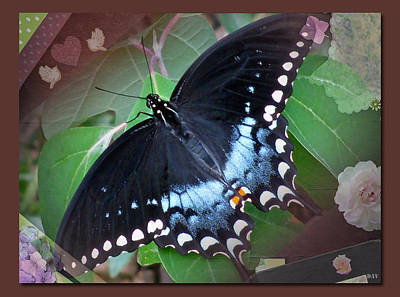Designed Natural Butterfly Poster by Debra     Vatalaro