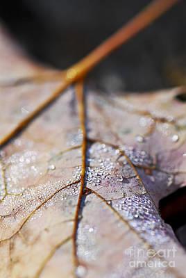 Dewy Leaf Poster
