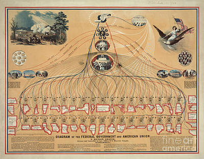 Diagram Of The Federal Government And American Union Poster