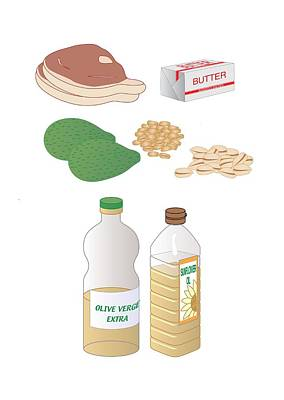 Dietary Sources Of Fat, Artwork Poster by Peter Gardiner