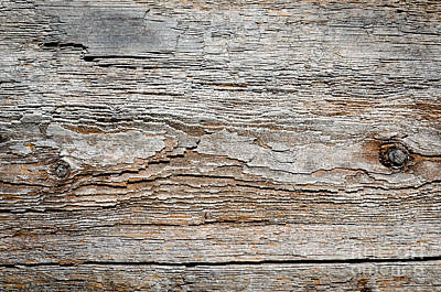 Digital Bark Texture As If Digitised Contours On Natural Wood Poster by Andy Smy