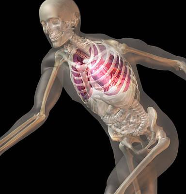 Digitally Generated Image Of Running Human Representation With Inner Human Organs Visible Poster